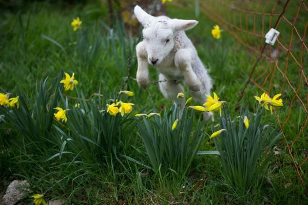 Spring! Copyright @ randomrocker.co.uk