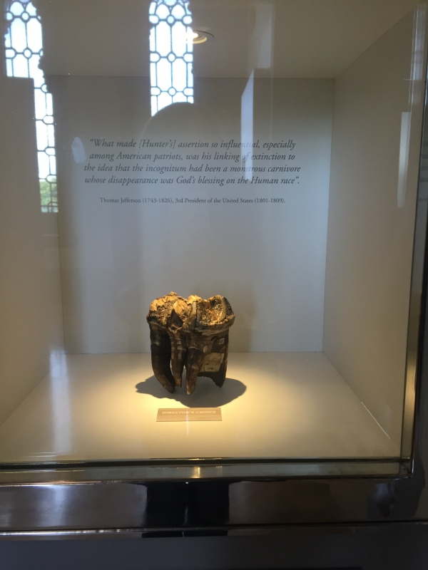 Mastodon tooth, with Thomas Jefferson quote explaining its significance to the collection. Picture by Kate