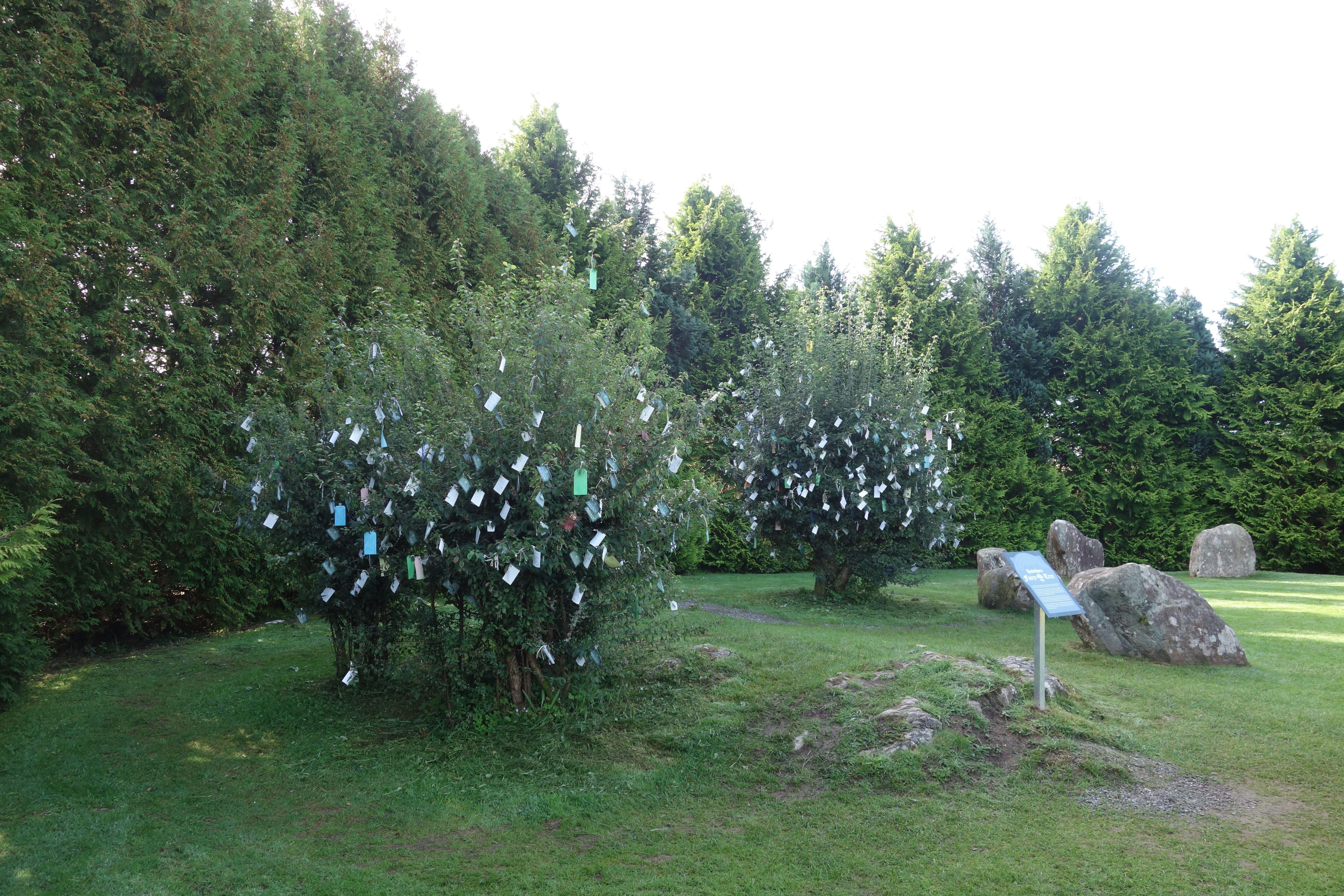 Figure 7 Fairy trees Kenmare (1)